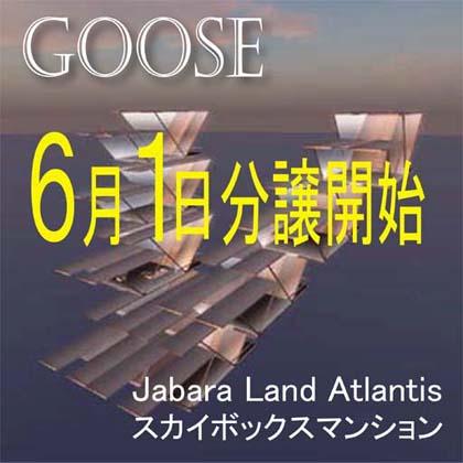 goose3_420.jpg